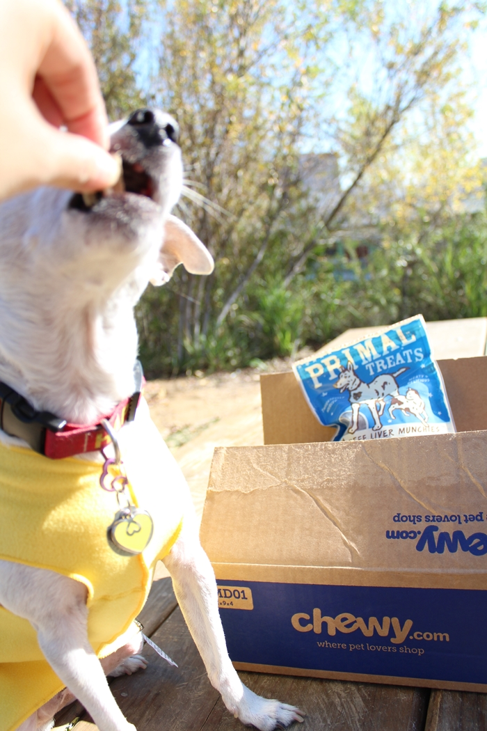 Primal Freeze-Dried Dog Treats Review #ChewyInfluencer