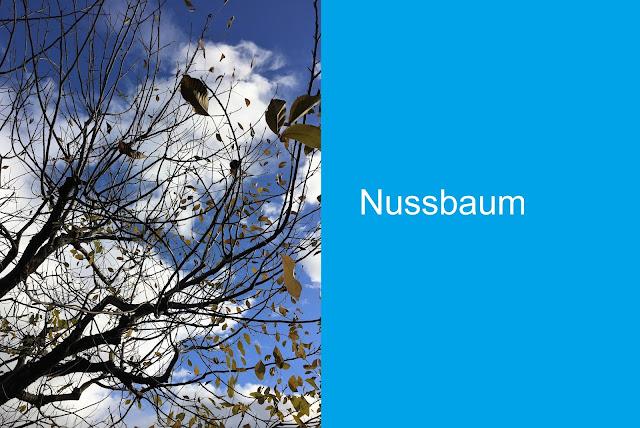 Nussbaum