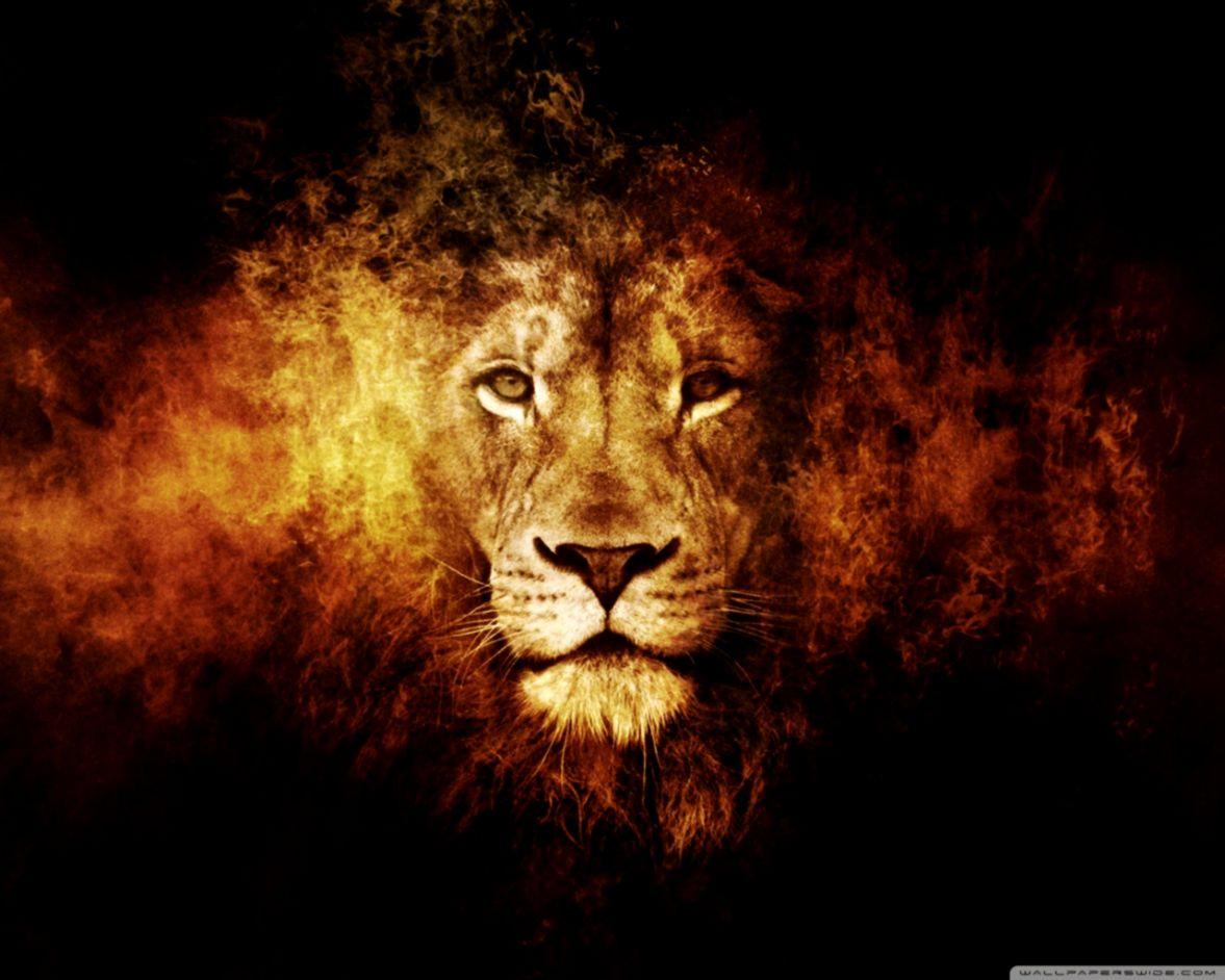 3d Lion Wallpaper Wallpapers Jobs