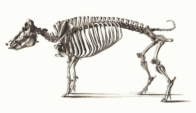 KKLDFD Funny Dinosaur Pterosaur Bone Fossil On 2018 Mens Boat Shoes
