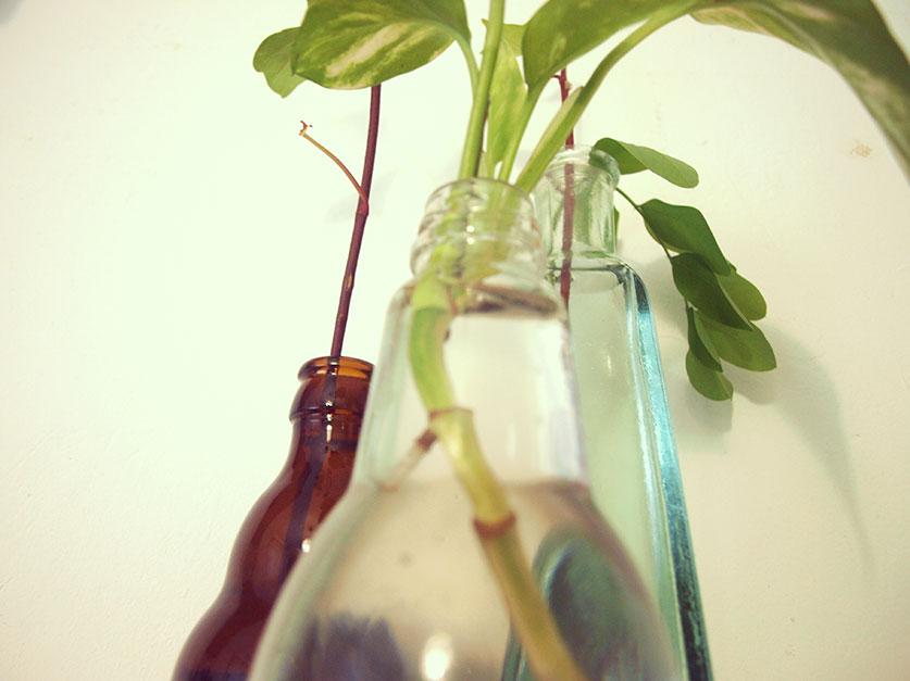 Dibucos: Esquejes de plantas en agua
