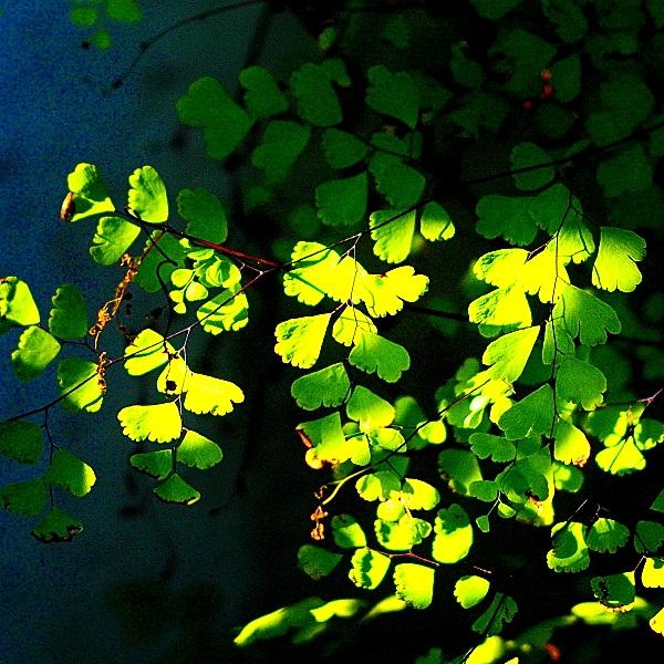 Digital Moments: Industar 61 L/Z 50mm f/2.8 03