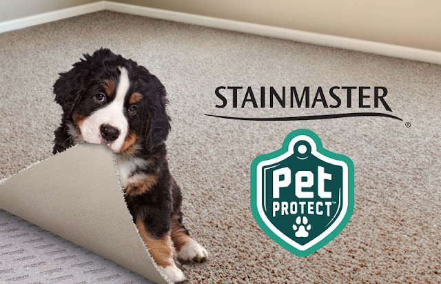 New features make carpet a great choice in homes with pets