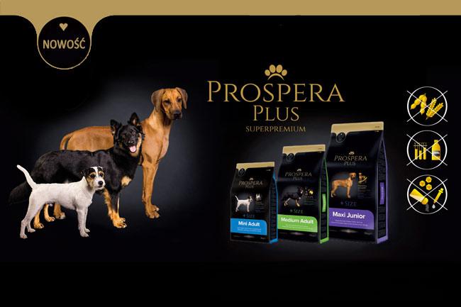 Karma dla psa Prospera