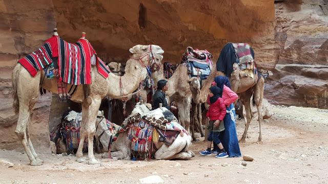 Camellos, Nabateos, Petra, Jordania, Jordan, Elisa N, Blog de Viajes Argentina