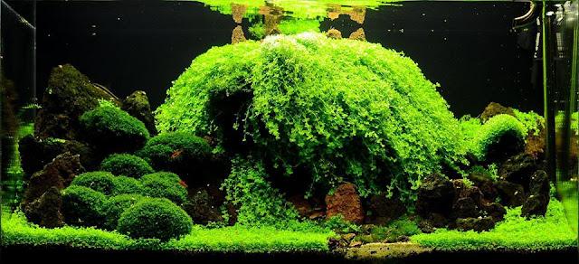 Hồ thủy sinh đẹp dùng Trân châu ngọc trai