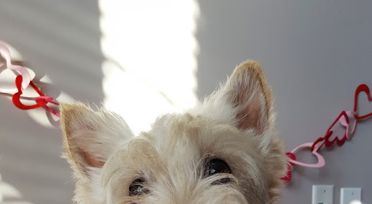 Valentine's Day Gift Ideas for Scottie Lovers