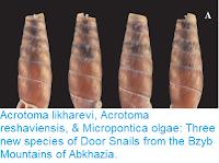https://sciencythoughts.blogspot.com/2018/01/acrotoma-likharevi-acrotoma.html