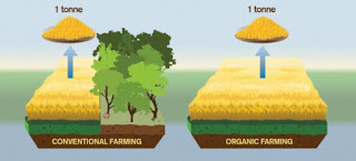 Makanan Organik memiliki dampak Iklim lebih buruk dibanding Makanan non Organik