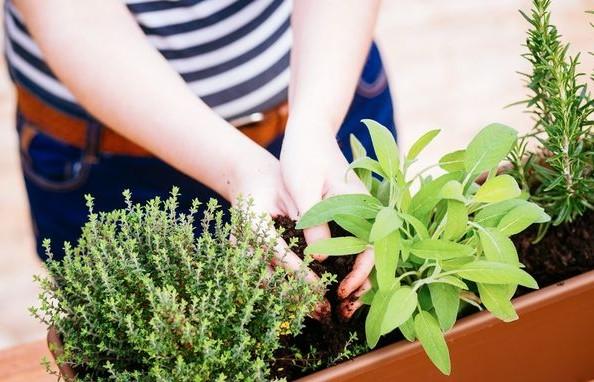 Τα 8 φυτά που απωθούν τα κουνούπια