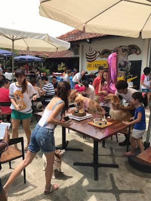 singapore pet friendly spaces