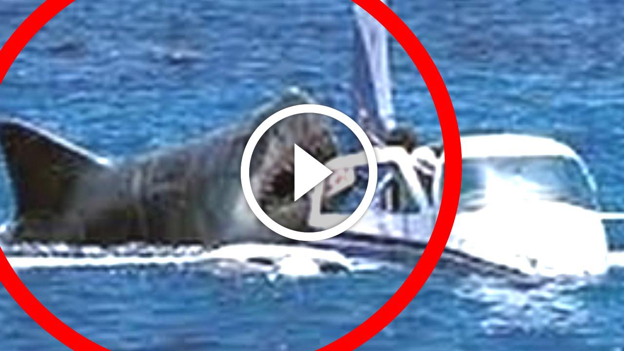 New Smyrna Beach Shark Attack Statistics