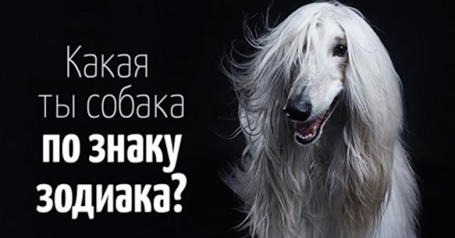Ваш знак зодиака расскажет на собак какой породы вы больше всего похожи