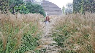 Hidden in tall grasses