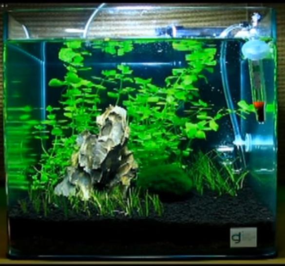 Contoh Gambar Aquascape Dan Jenis Tanaman Alam Ikan