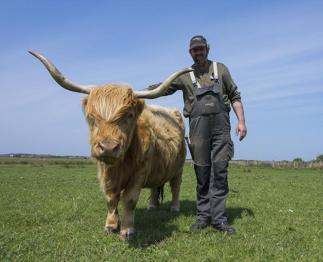 Langeoog, Highlandrinder, Rumbi, Ostfriesland, Bio, Nachhaltigkeit, Restaurant Seekrug