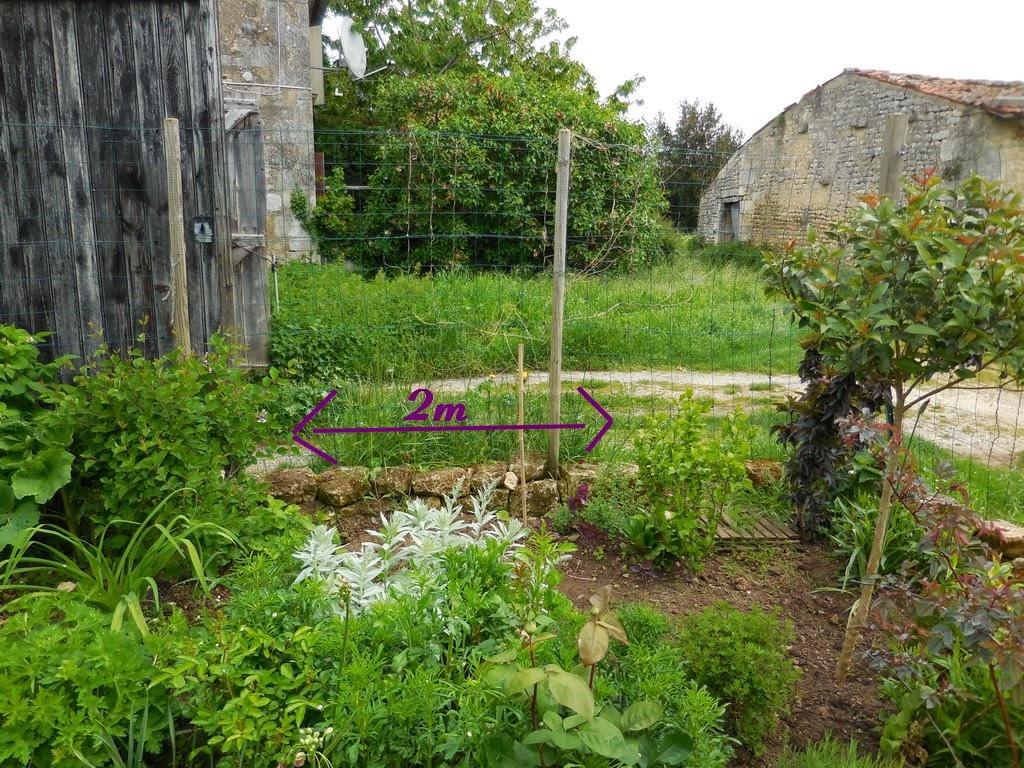 cagouille's garden : un nouvel arbuste pour le jardin
