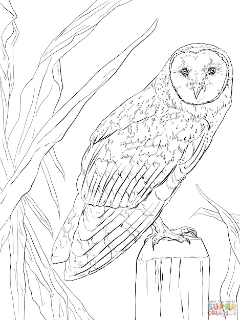 Click The Barn Owl Coloring Pages To View Printable