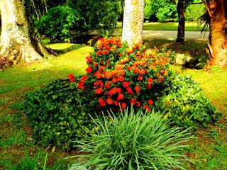 Flores no Memorial Mestre Valentim no Jardim Botânico do Rio de Janeiro