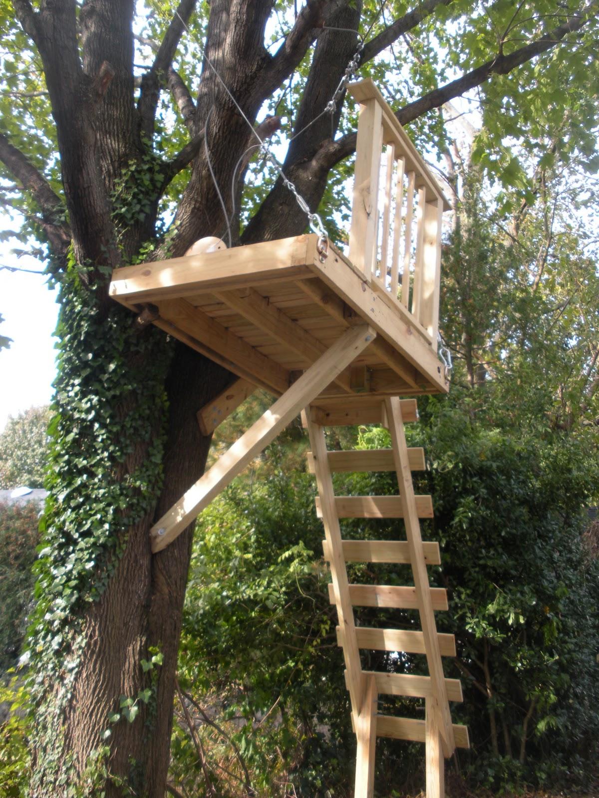 Backyard Zip Line   Design Builders