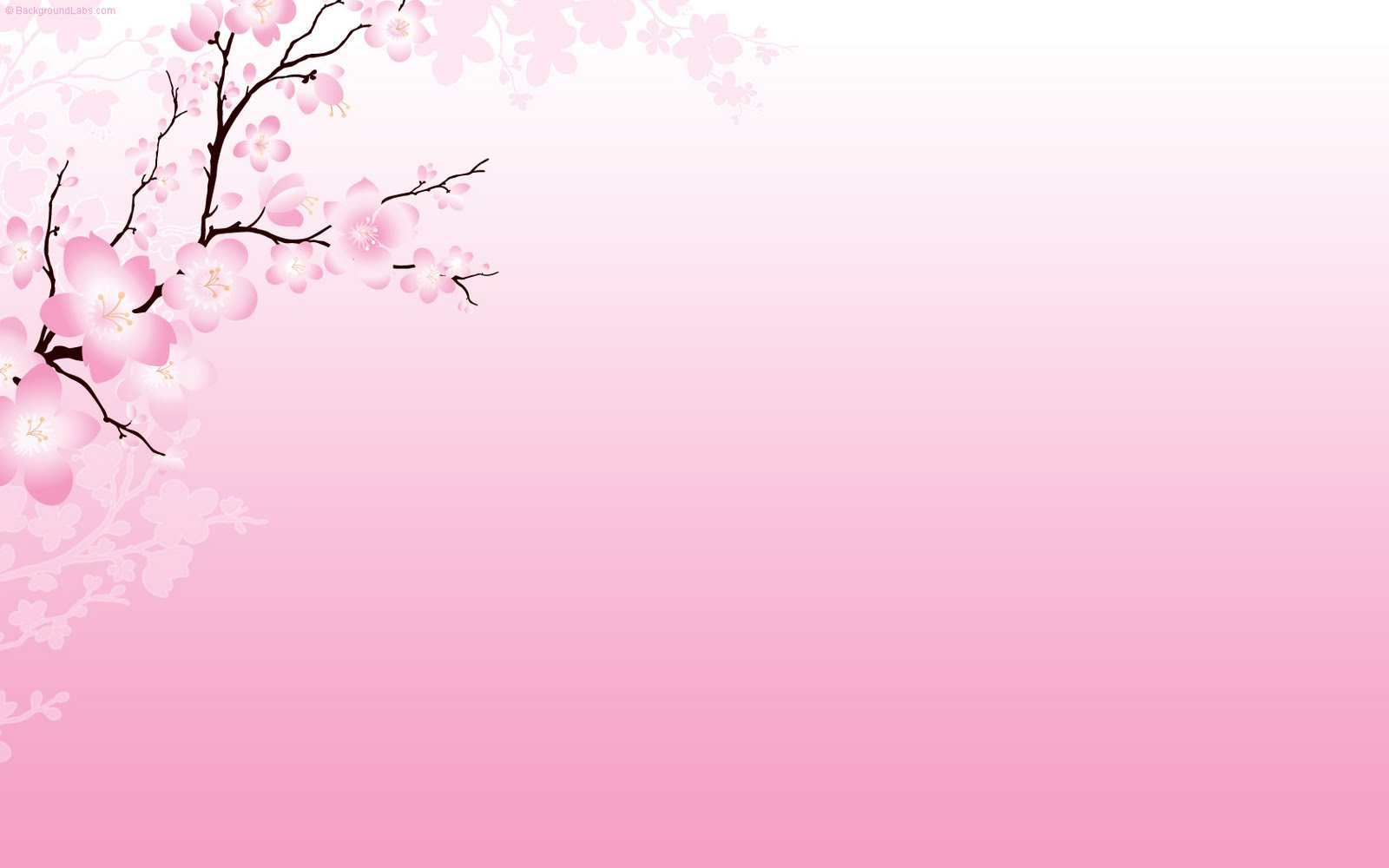 hd cherry blossom backgrounds - photo #34