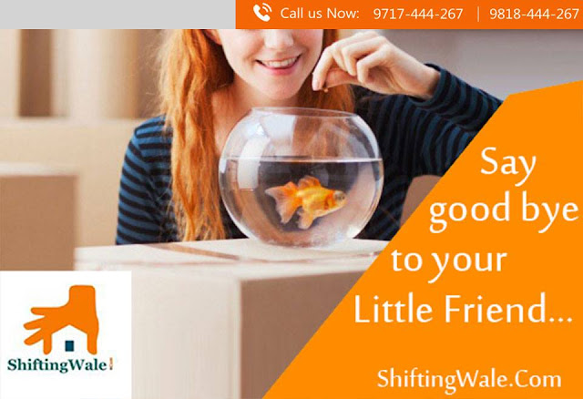 Packers and Movers Services from Delhi to Nashik, Household Shifting Services from Delhi to Nashik