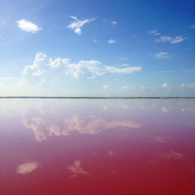 Amazing And Beautiful Pink Lake In City Mexico
