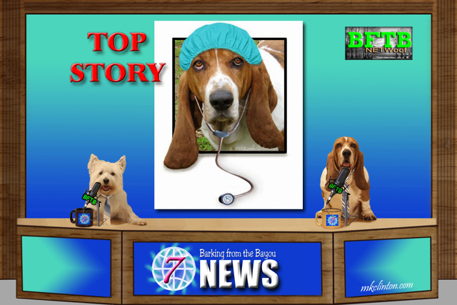 BFTB NETWoof News set with two dogs
