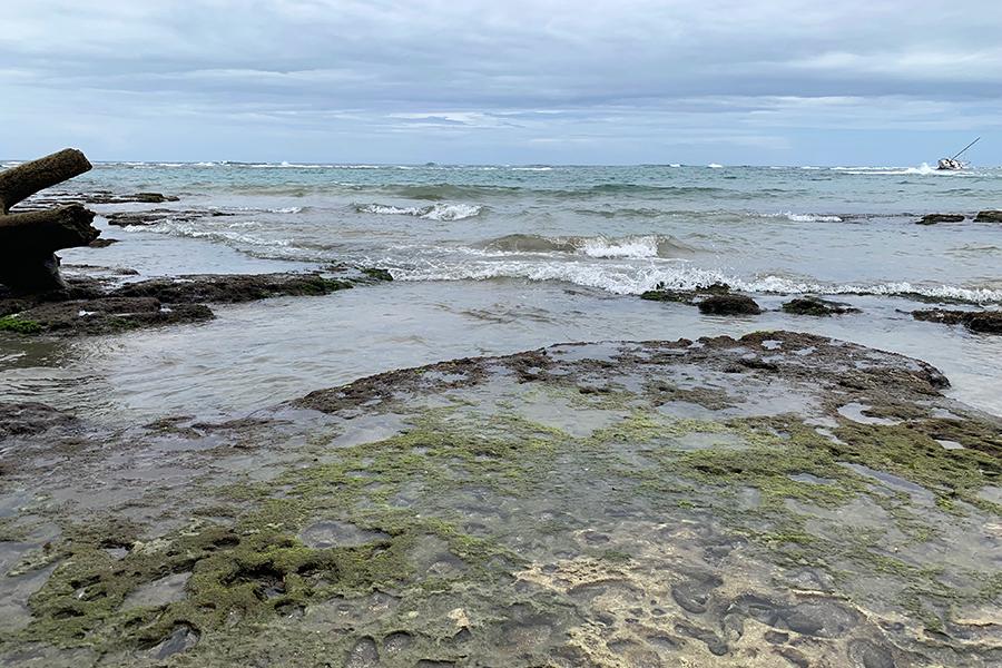 coral reef puerto viejo costa rica