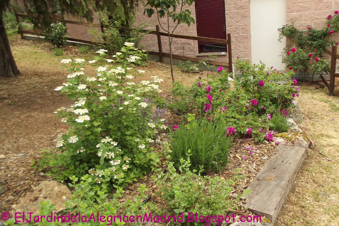 El jard n de la alegr a el arriate de rugosas rosa - Arriate jardin ...