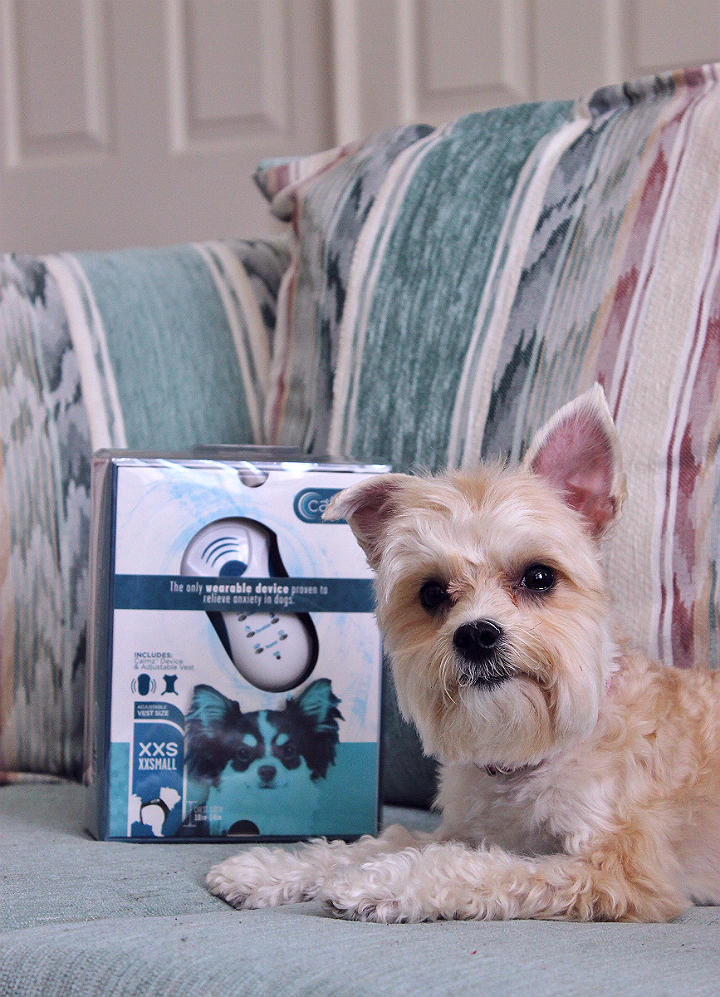 The Calmz Anxiety Relief System for dogs combines accupressure with audible therapy to help ease anxiety due to travel, seperation, thunderstorms, fireworks, and more.