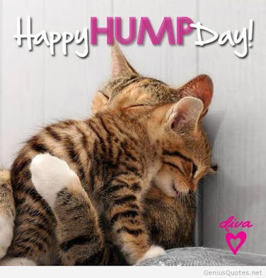 Happy Hump Day HD Wallpapers