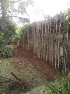 Jual Pohon Bambu Jepang | Tanaman Pagar Hidup | Jasa Tukang Taman Dbogor