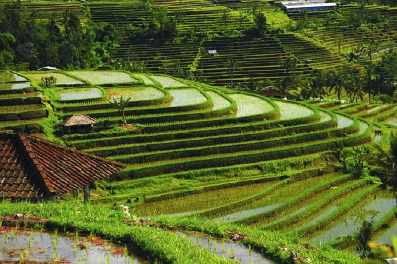 Rice terraces, Bali, Indonesia- Too Beautiful To Be Real? 16 Surreal Landscapes Found On Earth