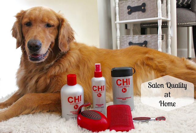 Grooming Your Golden at Home with Salon quality grooming at home with CHI for Dogs