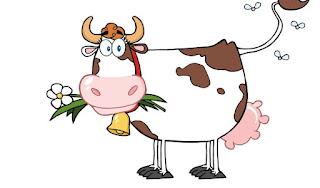 Não Transforme Sua Vaca Leiteira Em Boi de Piranha