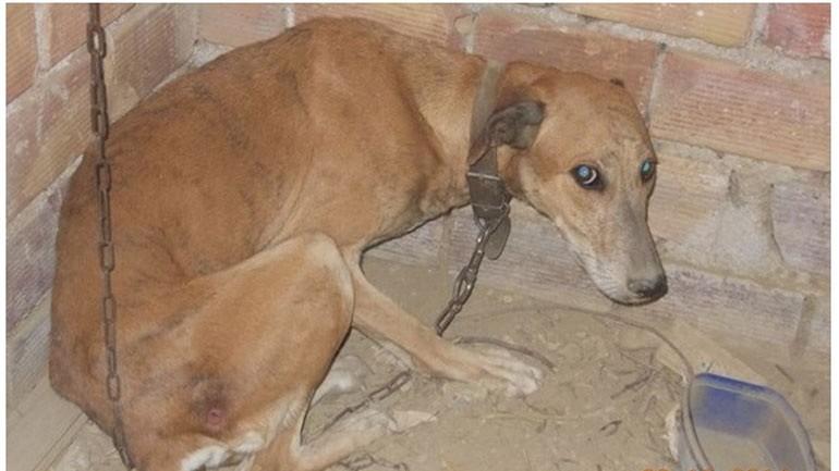 «Κωσταλέξι» ζώων στην Πάτρα - Απίστευτη ιστορία κακοποίησης