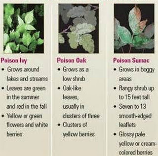 Some of the most poisonous plants in the world poision sumac rash images