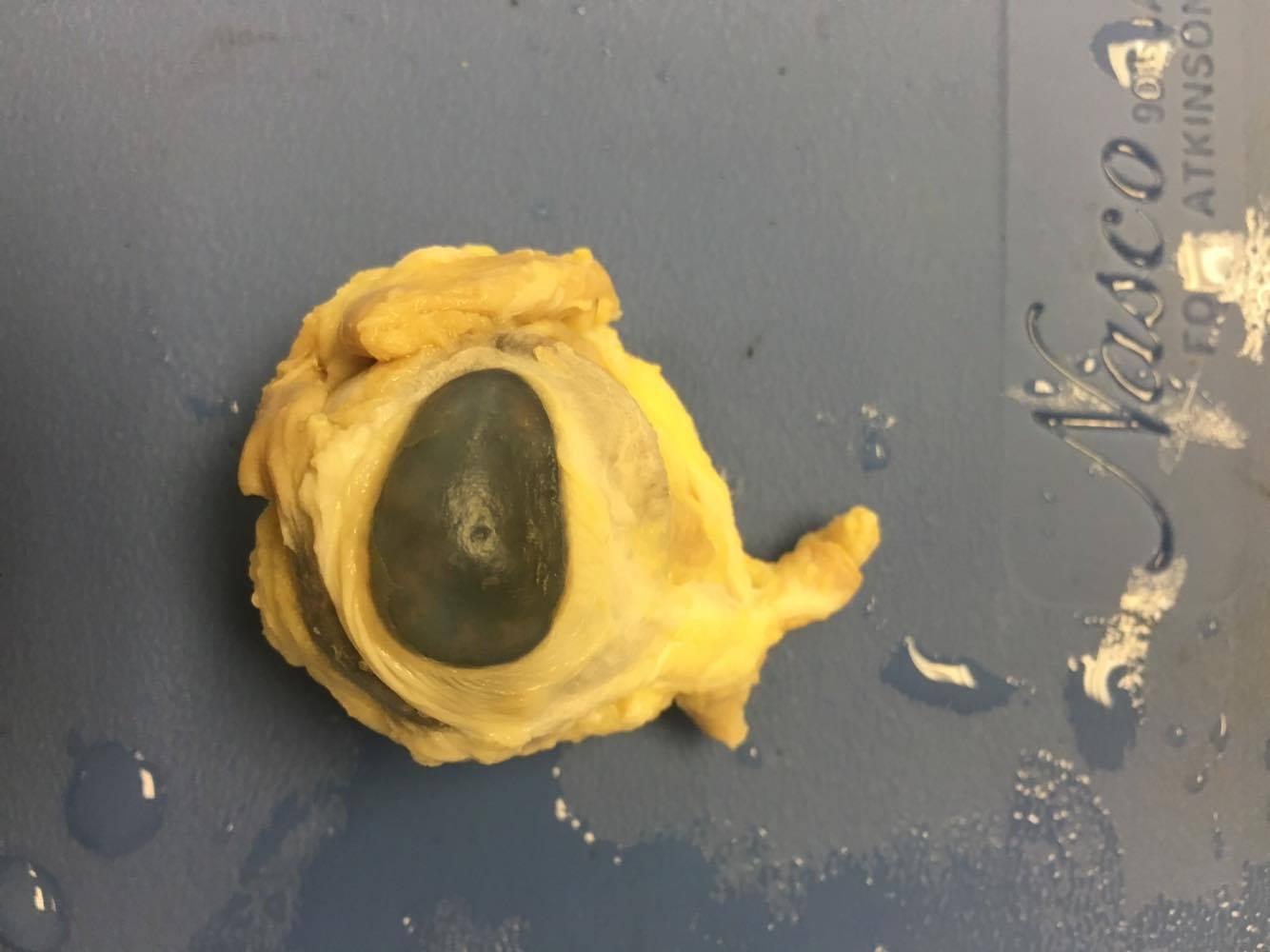 Worksheet For Eye Dissection