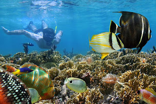 Snorkeling tour From Safaga Port
