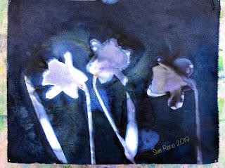 Wet cyanotype_Sue Reno_Image 578