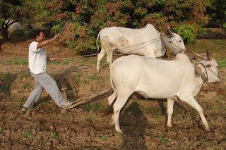 career in Rural Management