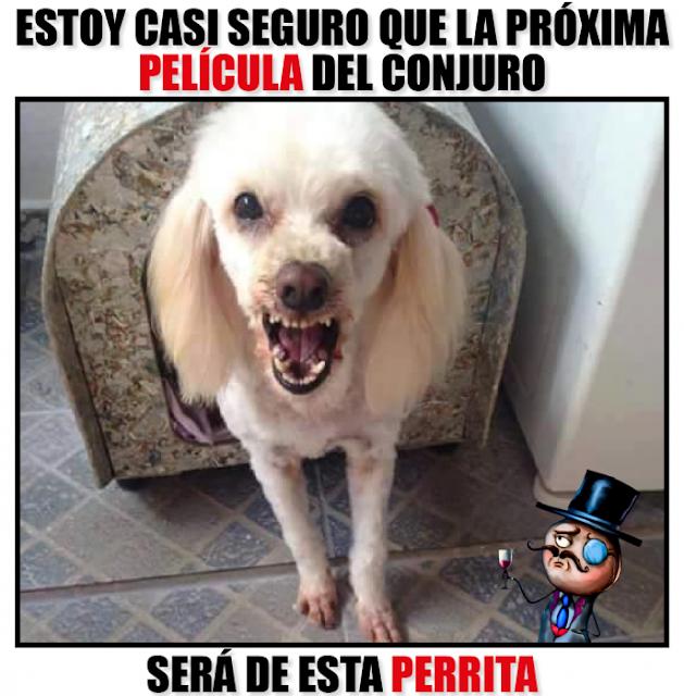 """Perra en adopción desata memes en Internet por su """"ternura"""""""