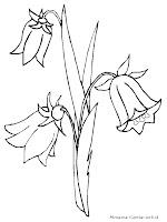 Mewarnai Gambar Bunga Terompet Daun Anggrek Hitam
