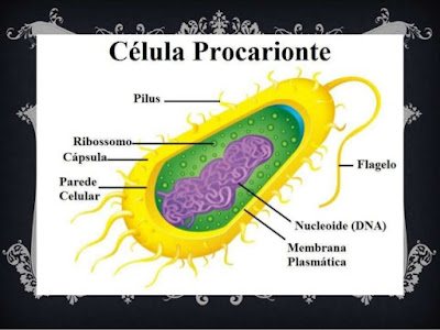 Células eucariontes e procariontes