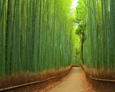 Bambuszerdő