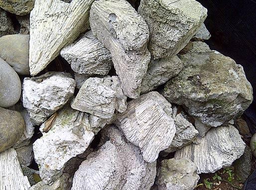 jual  batu karang