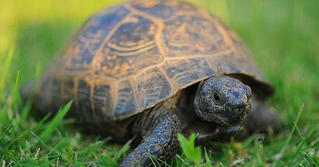 Information of Animal: Turtles Pet