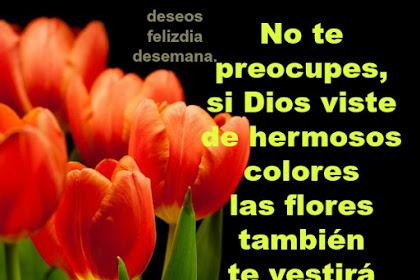 Frases De Amor Y Amistad Cortas Y Bonitas Cristianas