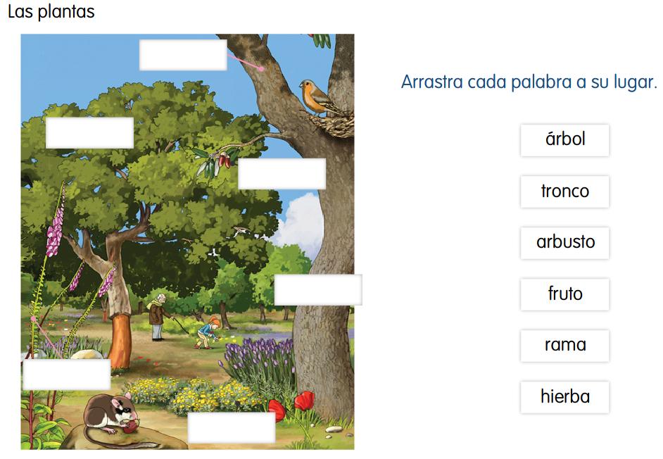 http://www.primerodecarlos.com/SEGUNDO_PRIMARIA/enero/tema1/actividades/CONO/010601.swf